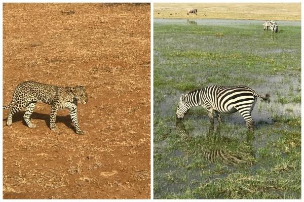 luxury African safari animals