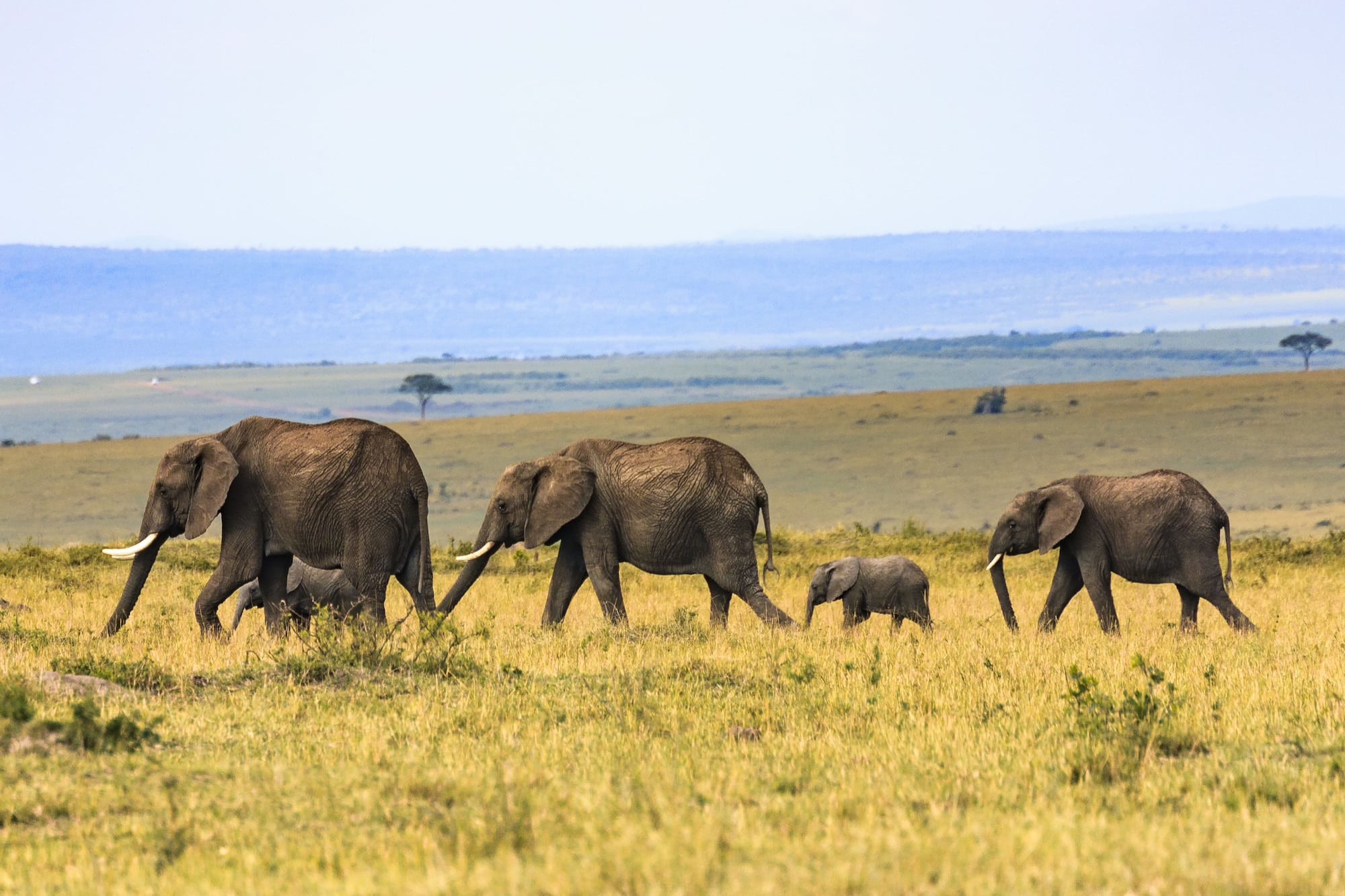 a group of elephants spotted on a luxury African safari