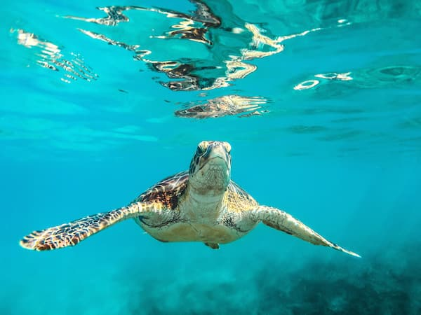 sea turtle in Barbados, top travel destinations 2018