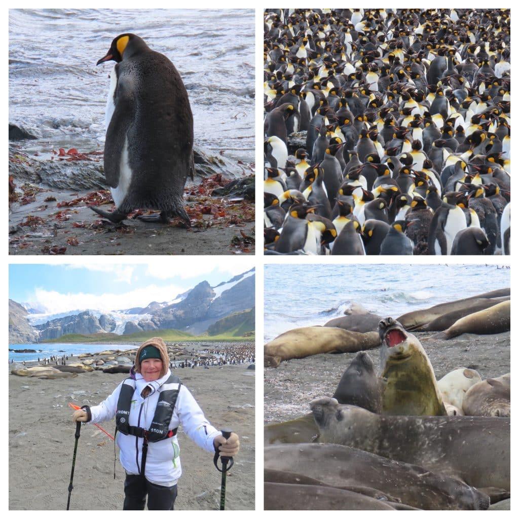 Scenic Antarctica Cruise
