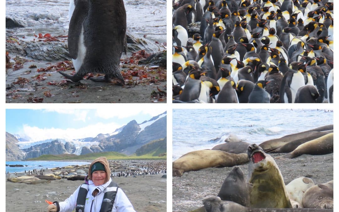 Luxury Antarctica Cruise Blog – Chapter 4 South Georgia Islands