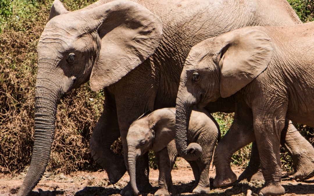 Luxury Family Travel: Why Travel Is the Greatest Gift of All – Client Travel Story: African Safari