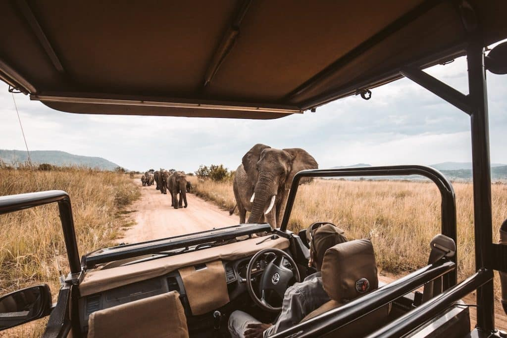 elephant herd, how to pack for an African safari trip